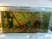 аквариум 200 литров