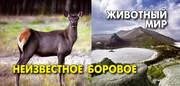Открытки «Неизвестное Боровое. Животный мир»