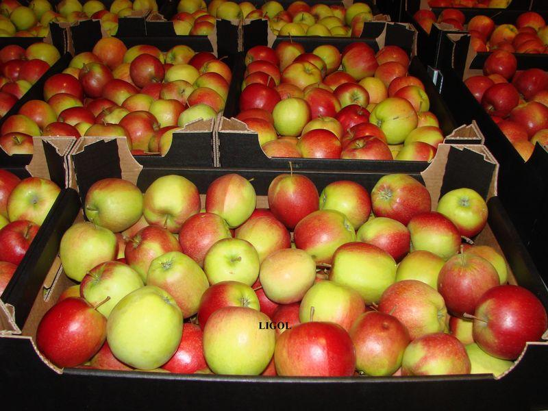 Доска объявлений овощи фрукты опт частные объявления гадая 74