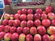 Производитель яблока в Польше