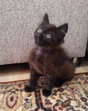 Частные объявления о продаже кошек в городе астана объявление-сдам квартиру в чернянке