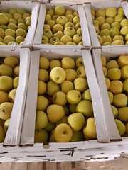 Продам оптом яблоки