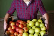 Свежие яблоки от производителя из Польши.