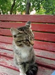 Молодого кота в хорошие руки отдаём